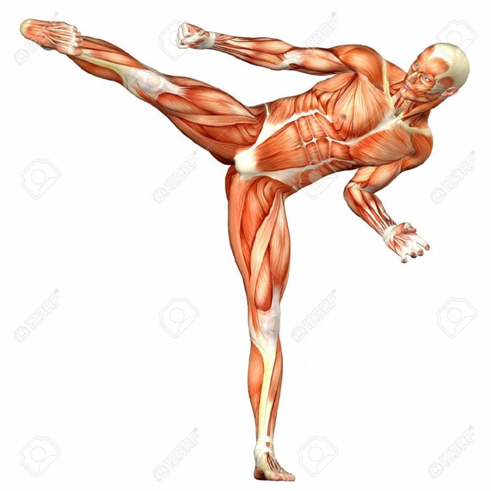 Küzdősportok és csípősérülések